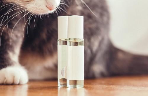 アロマオイルを眺める猫