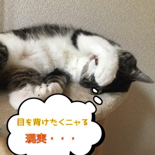 脱毛に顔を覆う猫