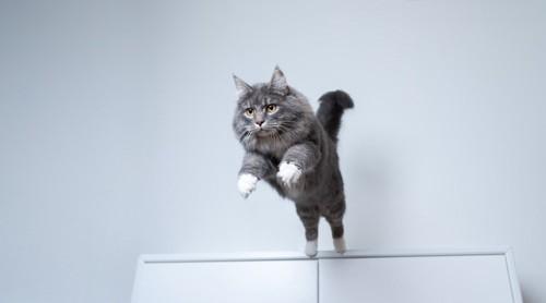白い棚の上からジャンプする猫