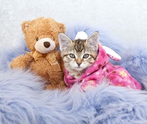 パジャマを着た猫