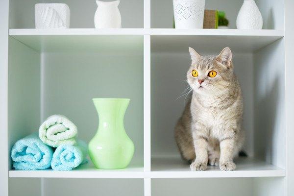 棚に座る猫