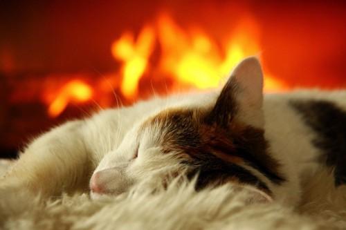 暖炉の前の猫