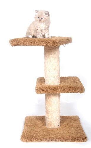 キャットタワーに乗っている子猫