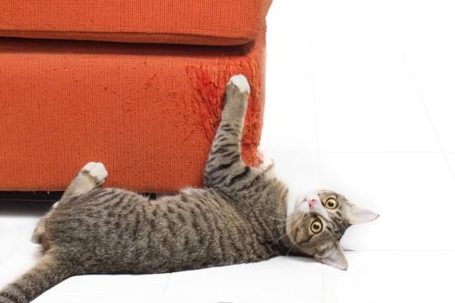ソファで爪を研ぐ猫