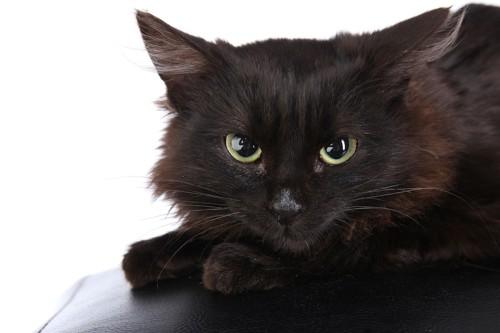 警戒してこちらを見つめる黒猫