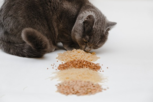 4種類の食べ物の匂いを嗅ぐ灰色猫