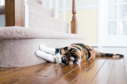 カーペットの段差で爪とぎする猫