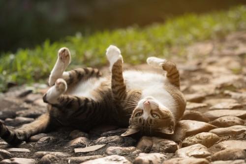 道の上で寝転ぶ猫
