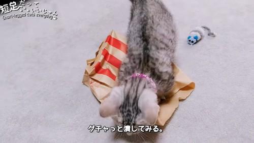 紙袋の上に乗る猫