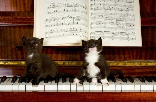 ピアノに乗る猫