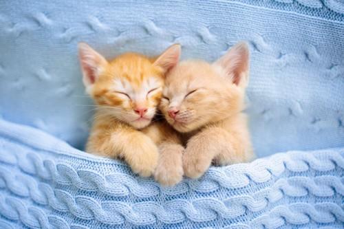 ブランケットの上に座ってカメラを見上げる2匹の猫