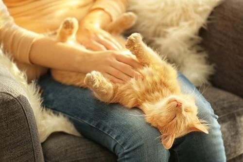 女性の膝の間で撫でられる猫