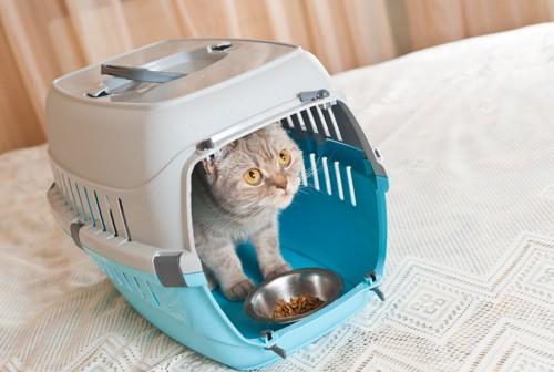 キャリーの中でご飯皿を前にする猫
