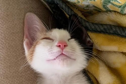 眠っている三毛猫