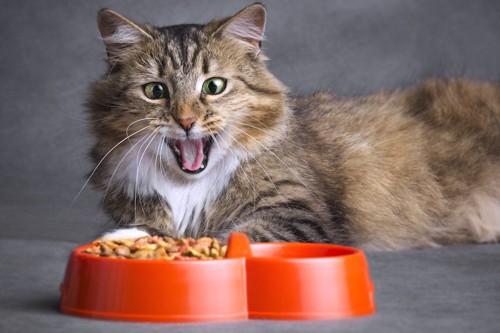 ご飯の入ったお皿の前であくびをする猫