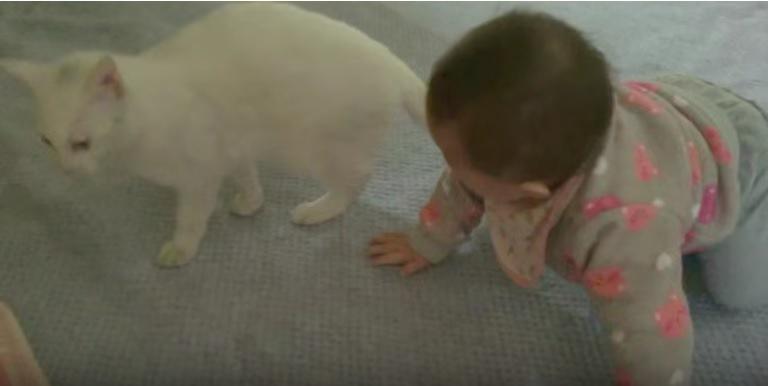 猫とハイハイする赤ちゃん