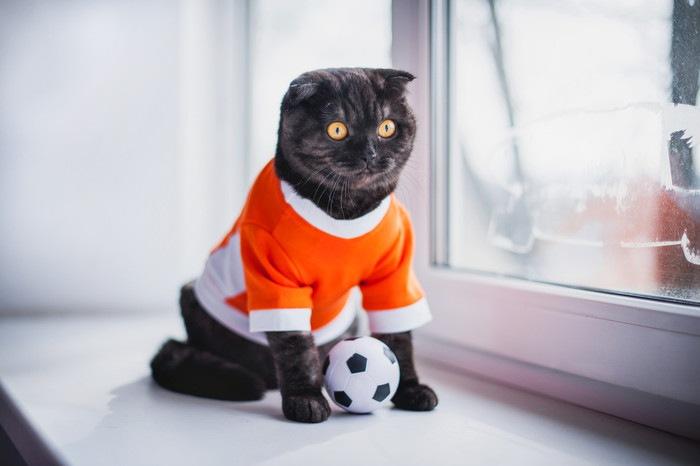 サッカーのユニフォームを着た猫