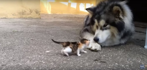 犬に近づく子猫