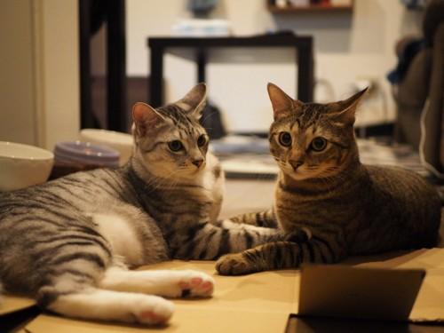 2匹の猫9919
