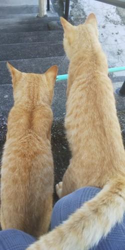 2匹の兄弟猫