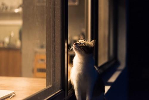 暗い中窓からのぞく猫