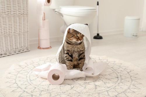 トイレットペーパーに包まった猫
