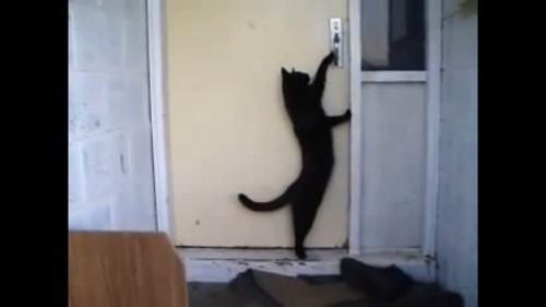 ノックする猫
