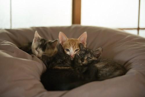 布団の上で寄り添って眠る子猫たち