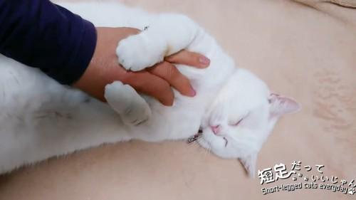 手を抱きしめて目を閉じる猫