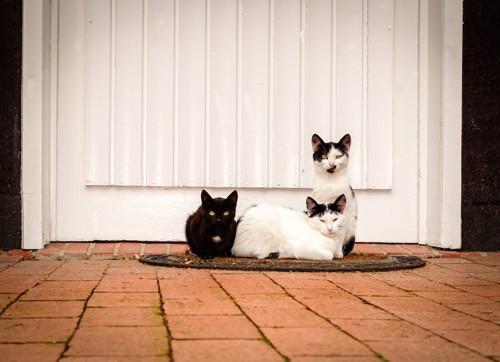 扉の前でくつろぐ三匹の猫