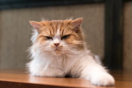 不機嫌そうな表情で片手を伸ばす猫