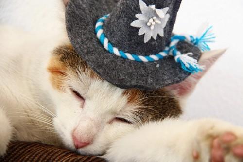 フェルト帽子を被った猫