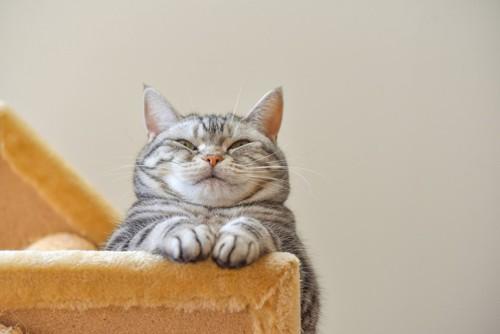 見つめる猫