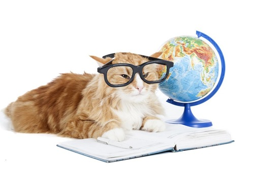 地球儀と眼鏡をかけて本を読む猫
