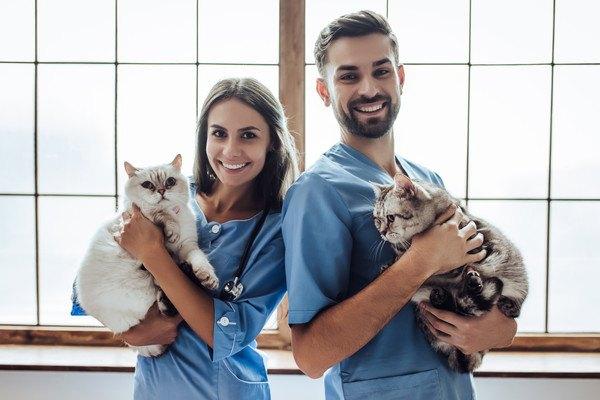 猫を抱っこしている獣医師