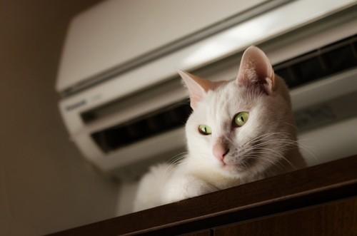 エアコンの真下の猫