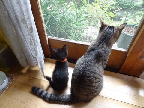 ココちゃんとナナちゃんの後ろ姿