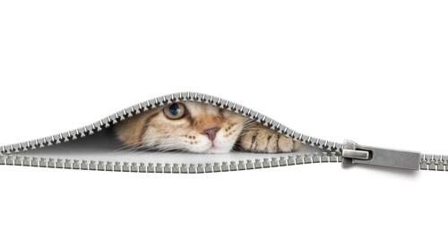 チャックの隙間と猫の顔