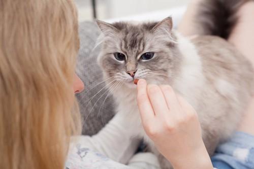 猫に餌をあげる女性
