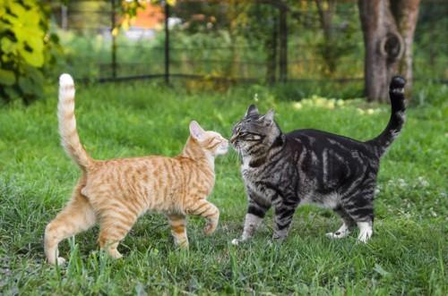 芝生の上で遊ぶ二匹の猫