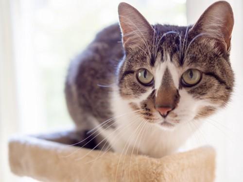 タワーの中段でこちらを見る猫