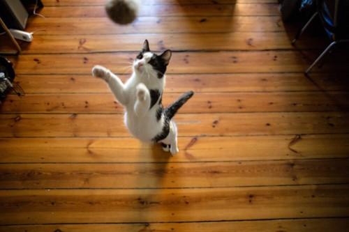 真上にジャンプする猫