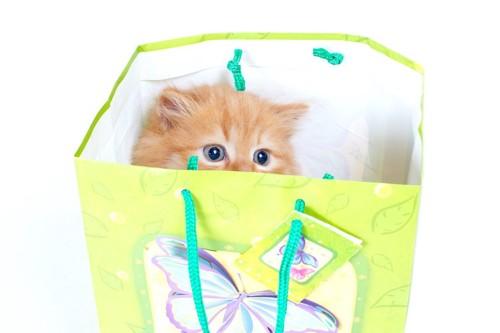 紙袋の中に隠れている猫