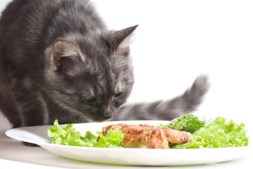 サラダと猫
