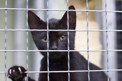 金網越しにこちらを見つめる黒猫