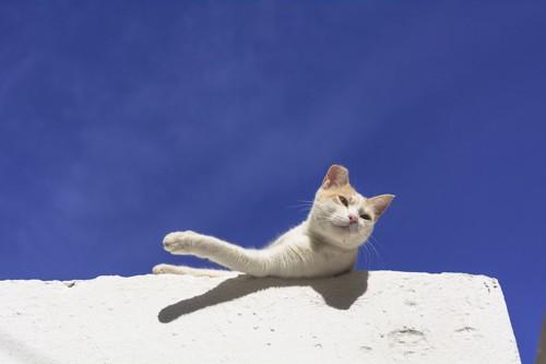 青空と港の猫