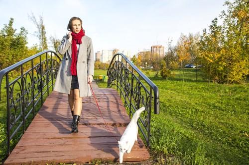 リードをつけて散歩する猫と女性