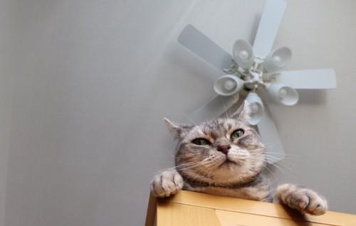 高いところから見る猫