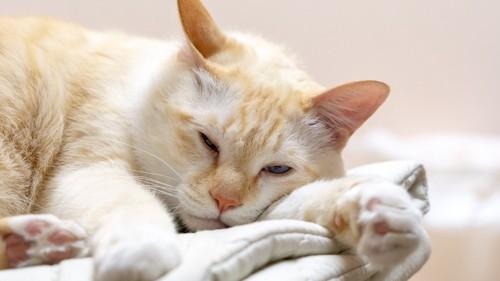 薄眼を開けてまどろむ猫