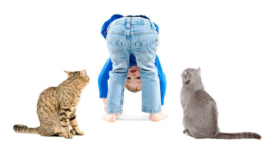 子供と二匹の猫